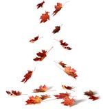 Stapel des Herbstes färbte Blätter auf weißem Hintergrund Ein Haufen von dif Stockbild