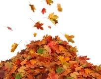 Stapel des Herbstes färbte Blätter lokalisiert auf weißem Hintergrund Stockfotos