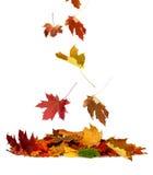 Stapel des Herbstes färbte Blätter lokalisiert auf weißem Hintergrund Lizenzfreie Stockbilder