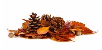 Stapel des Herbstlaubs, der Kiefernkegel und der Nüsse über Weiß Stockfoto