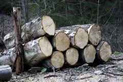 Stapel des Holzes Stockbild