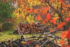 Stapel des Holzes in der Herbstwaldlandschaft Haufen des Schnittes und gestapelt lizenzfreies stockbild