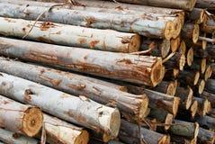 Stapel des Holzes in der Protokollspeichernahaufnahme Stockbilder