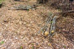 Stapel des Holzes geschnitten und im Wald gespeichert Stockbilder