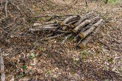 Stapel des Holzes geschnitten und im Wald gespeichert Lizenzfreies Stockbild