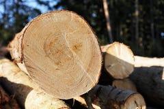 Stapel des Holzes im Wald Stockbilder
