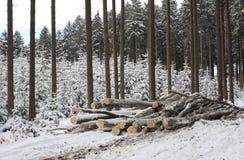 Stapel des Holzes im Wald Lizenzfreies Stockfoto