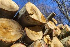 Stapel des Holzes im Wald Stockbild
