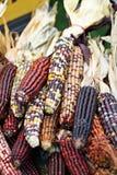 Stapel des indischen Mais Stockbilder