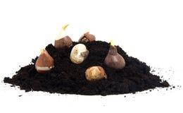 Stapel des schwarzen Gartenbodens und -Blumenzwiebeln Stockfoto