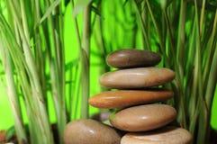 Stapel des Stein- und jungen Bambusbaums Stockfoto