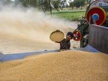 Stapel des Weizens u. des ernten Weizens Lizenzfreie Stockfotos