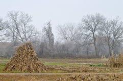Stapel droge graanstelen op het gebied Stock Foto