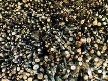 Stapel Feuer-Holz Stockfotografie