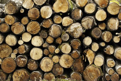 Stapel gesägte Bäume, Baumhintergrund Stockfotografie