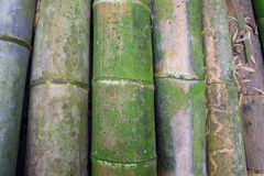 Stapel großer Bambus Lizenzfreies Stockfoto
