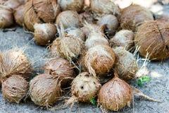 Stapel haarige braune Kokosnüsse Lizenzfreies Stockfoto