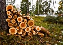 Stapel Holz in einem Wald Lizenzfreies Stockbild