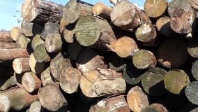 Stapel houten logboeken stock footage