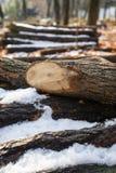 Stapel Klotz des hölzernen Feuers bedeckt im Schnee stockbilder