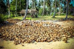 Stapel kokosnoten in landbouwbedrijf voor kokosnotenolie Stock Foto