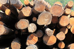 Stapel Logs Stockfoto