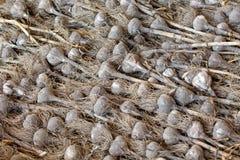 Stapel natürlicher Knoblauch des grauen Oberteils Lizenzfreie Stockfotografie