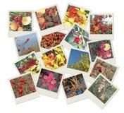Stapel polaroidfotoschüsse mit Herbsttönungen Stockfotografie
