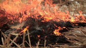 Stapel trockenes Gras auf Feuer stock video footage