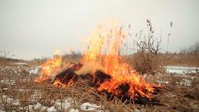 Stapel trockenes Gras auf Feuer stock footage