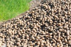 Stapel van aardappels Stock Fotografie