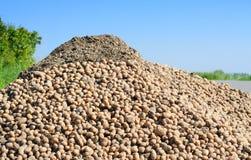 Stapel van aardappels Stock Afbeeldingen