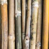 Stapel van bamboestelen Stock Foto's