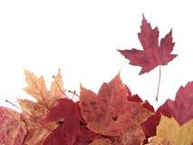 Stapel van bladeren over wit Royalty-vrije Stock Foto's