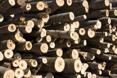 Stapel van bomen Royalty-vrije Stock Afbeeldingen