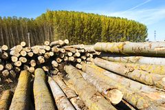 Stapel van bomen en bos Stock Fotografie