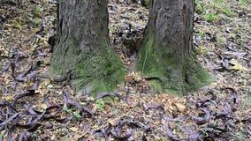 stapel van boombonen ter plaatse stock video