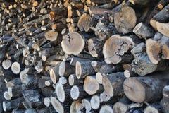 Stapel van boomstammen Royalty-vrije Stock Foto's