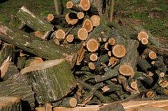 Stapel van bouw ruw hout in zaagmolen Royalty-vrije Stock Foto