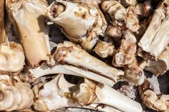 Stapel van dierlijke beenderenclose-up Stock Afbeelding