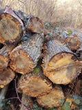 Stapel van doorstane ltreeboomstammen Stock Fotografie