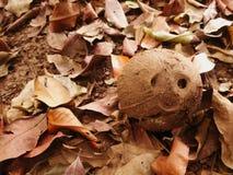 Stapel van droge bladeren en kokosnoot Royalty-vrije Stock Afbeelding