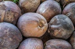 Stapel van droge kokosnoot in landbouwbedrijf Royalty-vrije Stock Afbeelding