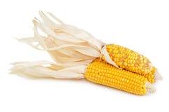 Stapel van droog geïsoleerd maïskolfgraan Stock Foto