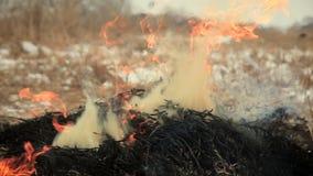 Stapel van droog gras op brand stock video