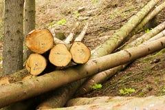 Stapel van felled bomen Royalty-vrije Stock Fotografie