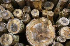 Stapel van felled boomboomstammen Royalty-vrije Stock Fotografie