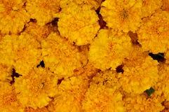 Stapel van gele goudsbloembloemen stock fotografie