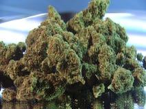 Stapel van geoogste medische marihuana stock videobeelden