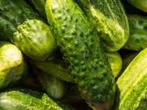 Stapel van groene komkommers Stock Foto